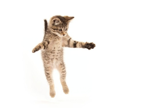 ジャンプする子猫