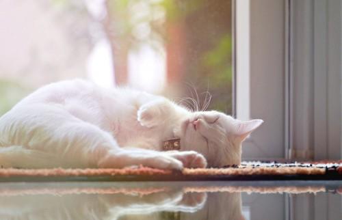 わざと寝転ぶ猫