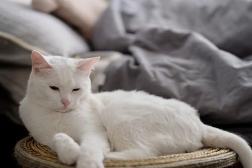 寝る直前の猫
