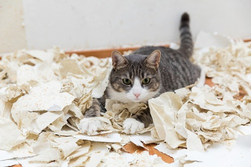 散らかった部屋にいる猫