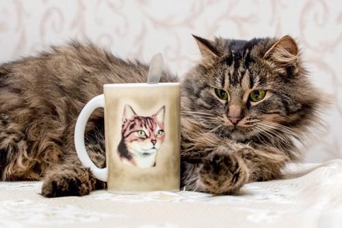 猫とマグカップ