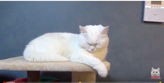 黄ばんでいる猫
