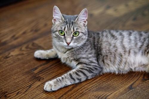 床に張り付く猫