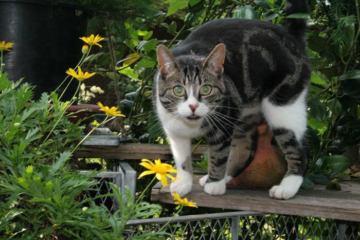 驚いた顔でこちらを見る猫