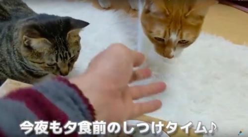 猫にしつけ