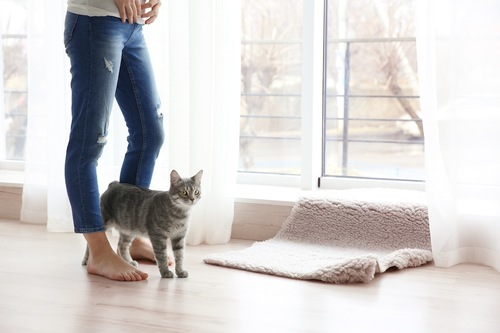 人の足の間を歩く猫