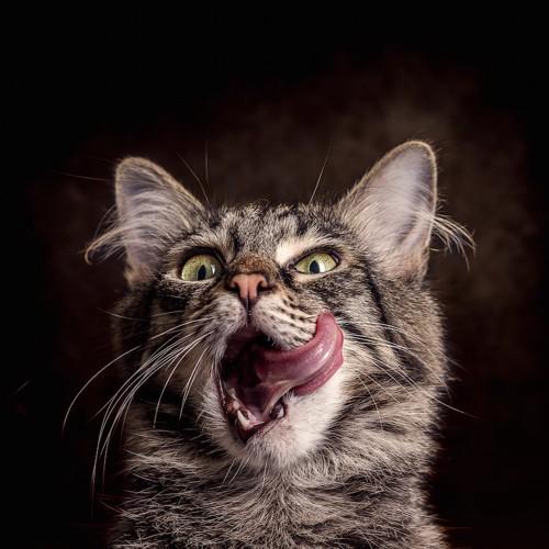 ホラーな雰囲気で舌をだす猫