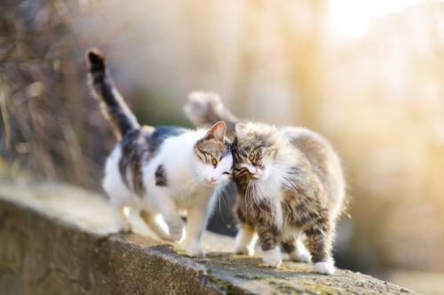 塀の上で寄り添う二匹の猫