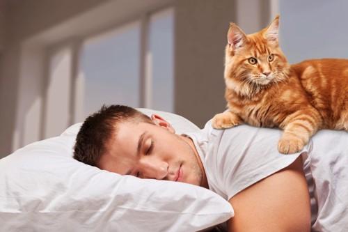 男性の背中の上に乗る猫