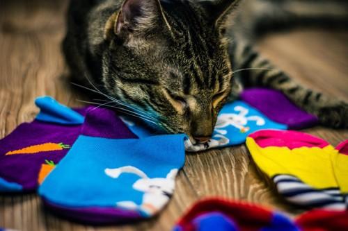 靴下を集める猫