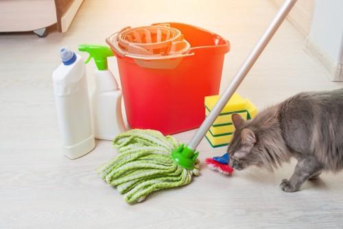 掃除道具を見る猫