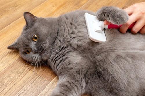 猫にブラシをかける人