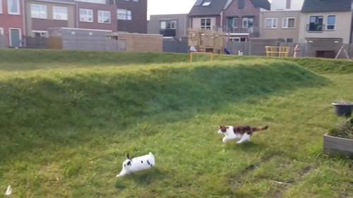 追いかけっこするウサギと猫