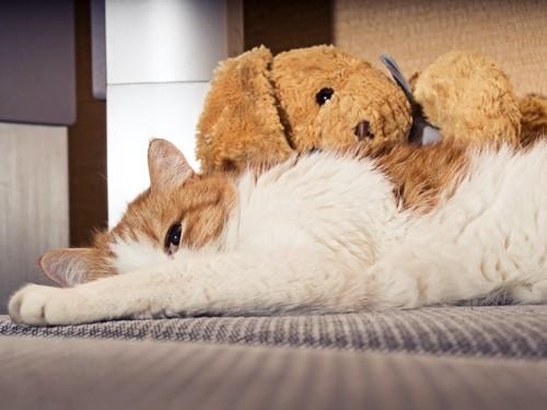 ぬいぐるみと一緒に横になっている猫