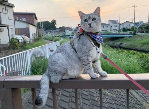 橋の欄干にいる猫