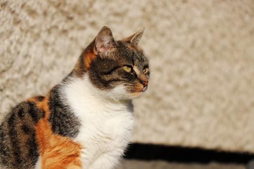 一点を見つめる猫