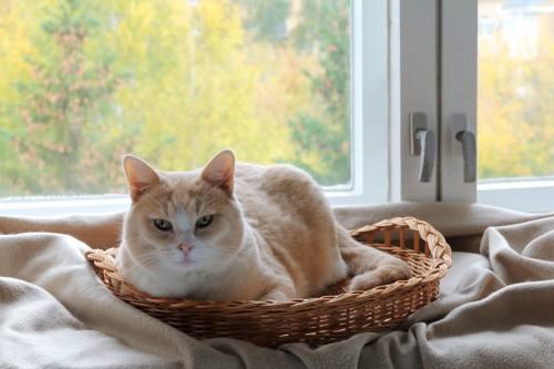 窓辺でかごに入る猫