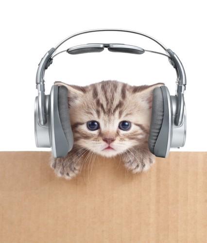ヘッドフォンをした猫
