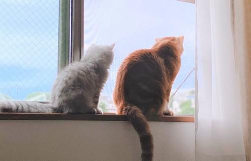 ニャルソックしている猫たち