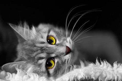 まったりタイムの猫