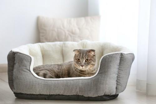 猫用ベッドの中で寛ぐ猫