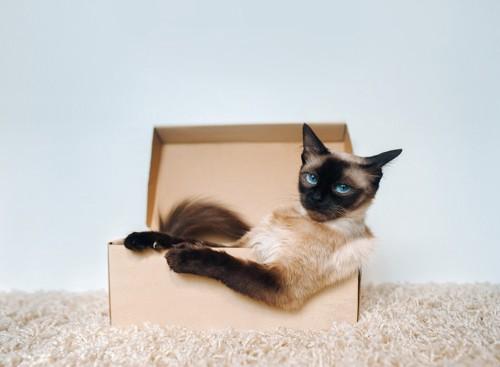 箱に入りくつろぐ猫