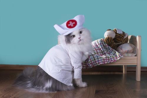 看護士の服を着た猫