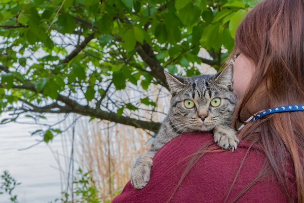 女性に抱かれて背中越しに後ろを見ている猫