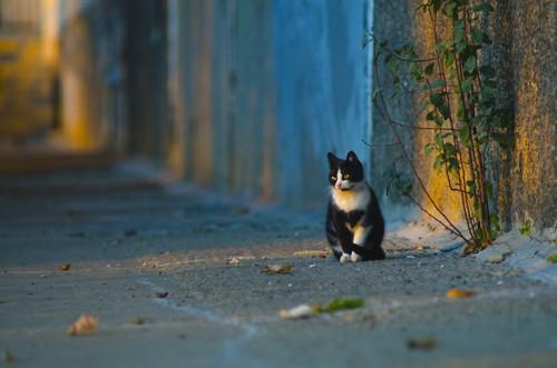 道の隅にひとりぼっちで座る猫