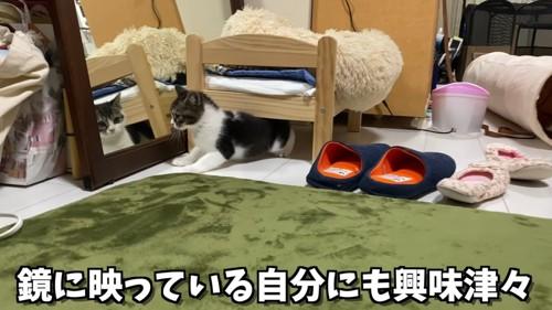 鏡の前にいる子猫