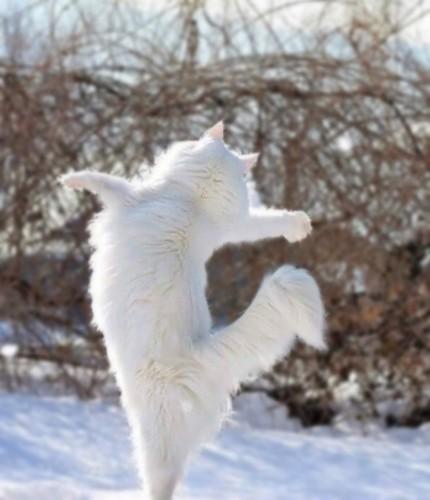 立ち上がって両手を広げる猫の後ろ姿