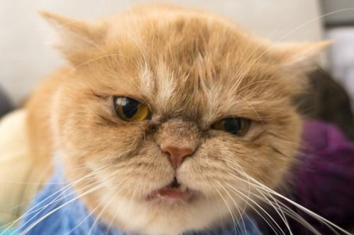 悪そうな顔をしている猫
