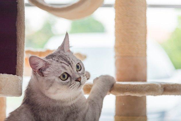 キャットタワーにてをかけている子猫