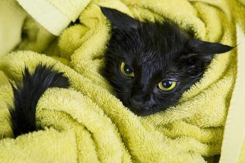 タオルで包まれている黒猫