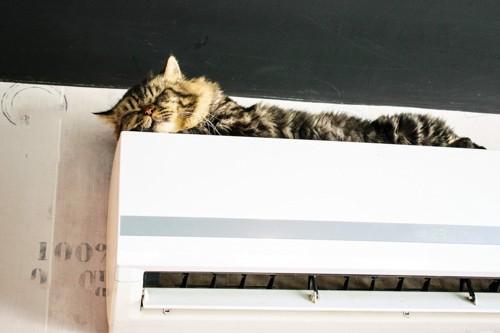 エアコンの上で寛ぐ猫
