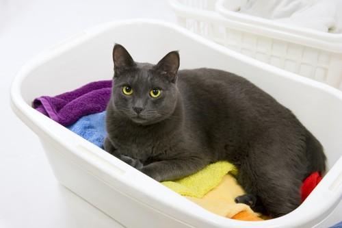 洗濯ものの中にいる猫