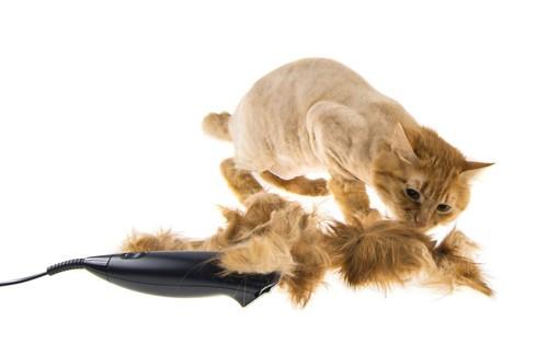 バリカンと丸刈りになった猫