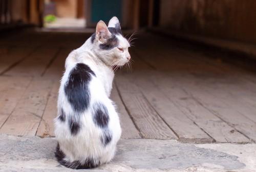 横を向くシニアの猫