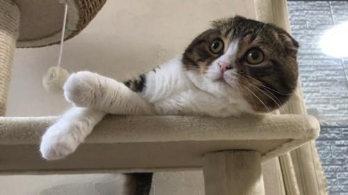 キャットタワーで横になっている猫