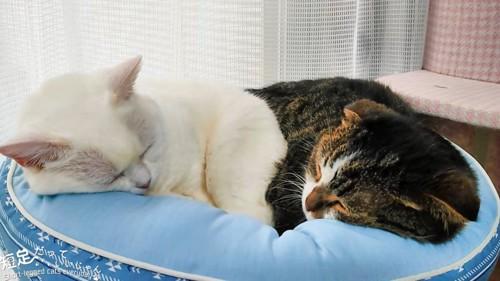 白猫と黒系の猫