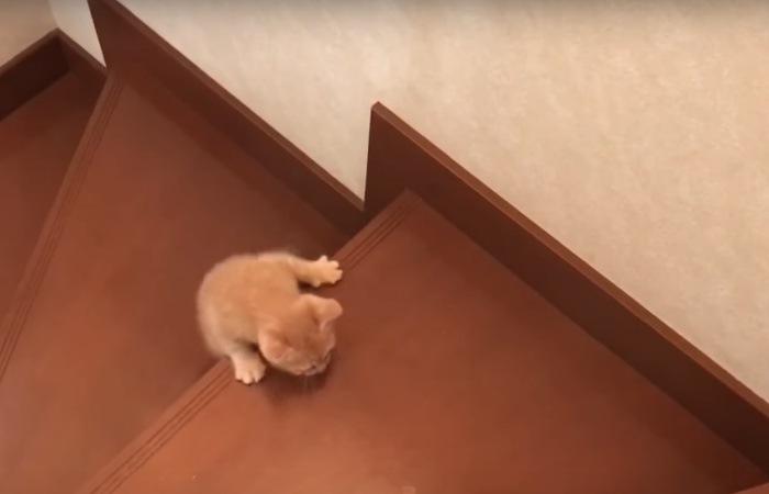 必死に階段を上る猫