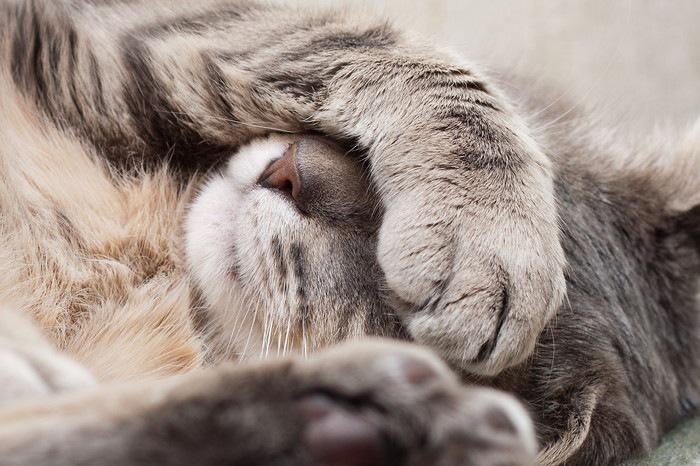 顔を覆い寝ている猫