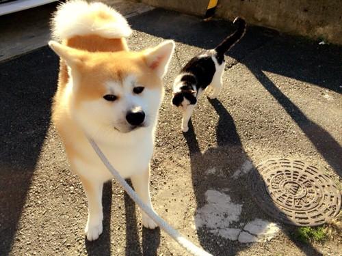 なかじまさんと愛犬