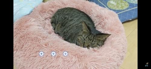 ベッドで丸まる猫