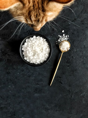 ボールの中の塩に顔を近づける猫