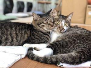猫スタッフ紹介ページトップの2匹の猫
