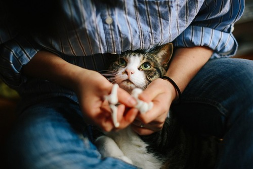 手を握られている猫