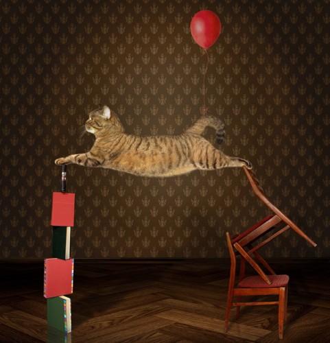 サーカスでパフォーマンス中の猫