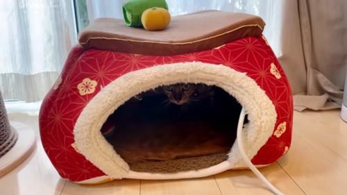 コタツベッドの中にいる猫