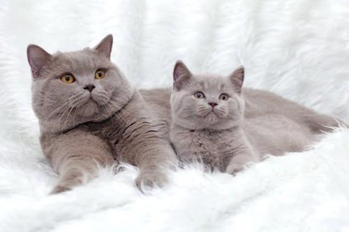 そっくりの猫たち